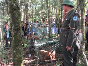 Vườn Quốc gia Hoàng Liên tổ chức thả động vật hoang dã sau cứ hộ về môi trường tự nhiên